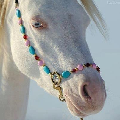 www.pinterest.com - (Pferde, Farbe)