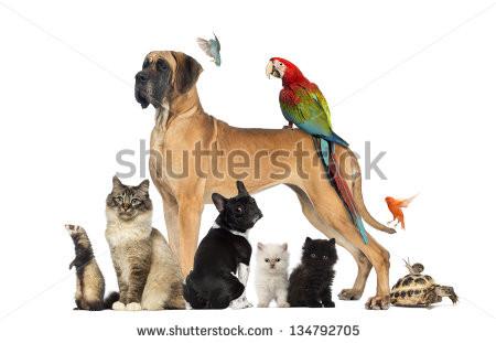 - (Hund, Katzenklo)