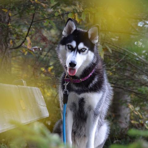 Inouk :) - (Hund, Deutschland, Waerme)