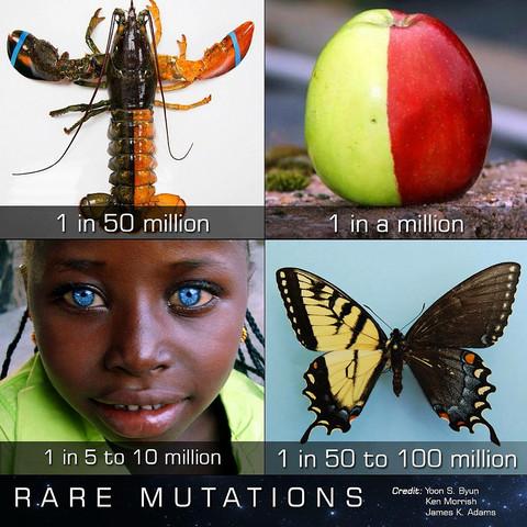 Mutationen - (Biologie, Pflanzen, Natur)