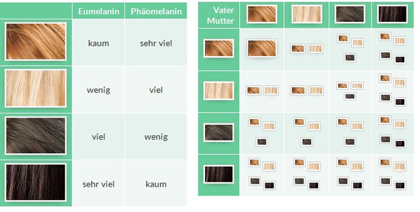 Haarfarbe - (Medizin, Biologie, Genetik)