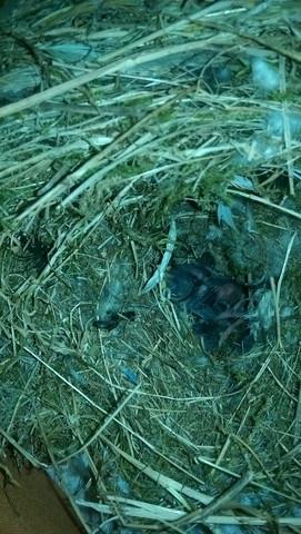 - (Tod, Vogel Babys,  vogel mama)