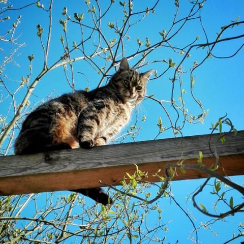 - (Freizeit, Tiere, Katze)