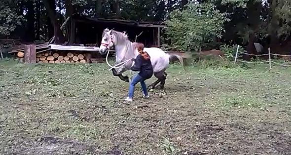 losreißen - (Pferde, reiten, Bodenarbeit)