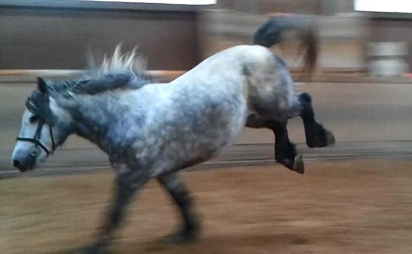 nachtreten - (Pferde, reiten, Bodenarbeit)