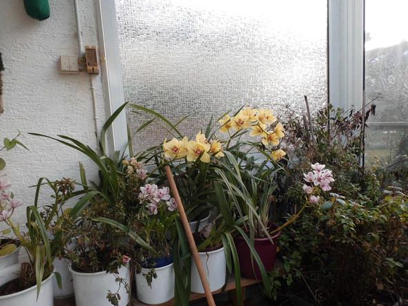 Orchidee - (Pflege, Pflanzen, Haltung)