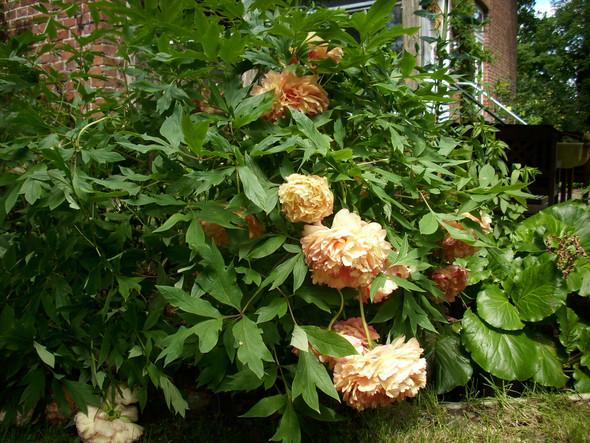 - (Geschenk, Pflanzen, Blumen)
