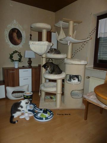 Petfun Gesa....Kratztonne selbst gepimpt :-)  - (Katze, Haustiere, Katzen)