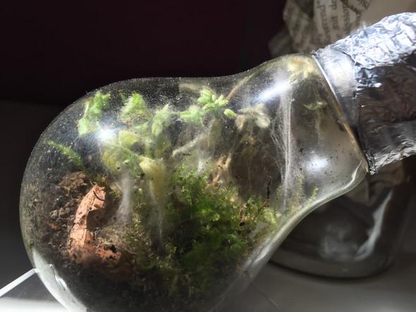 was ist da los mit meiner pflanze pflanzen terrarium. Black Bedroom Furniture Sets. Home Design Ideas
