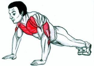 Beanspruchte Muskelgruppen bei Push-Ups - (gutefrage, Fragen, Rat)