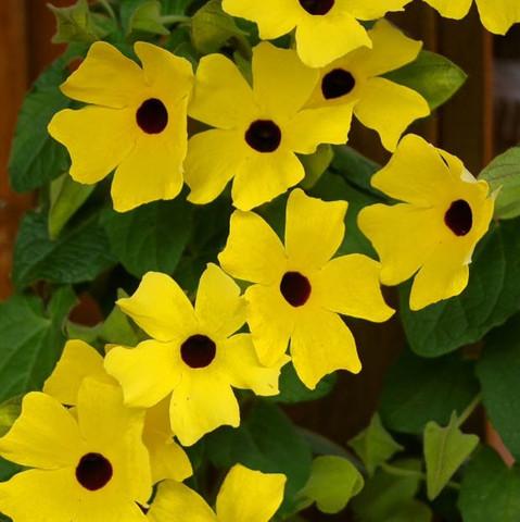 Ssssssss - (Kletterpflanze, Lamellenzaun)