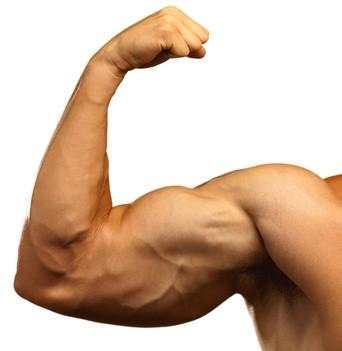 - (Training, Muskeln)
