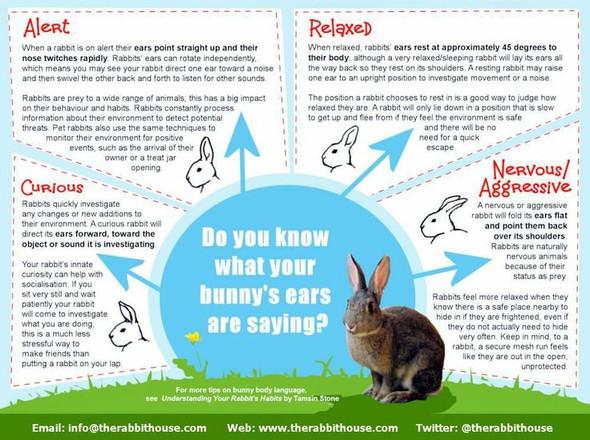 Ears - (Wissen, Kaninchen)