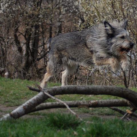 Hund in Bewegung ^^ - (Kamera, Spiegelreflexkamera, DSLR)