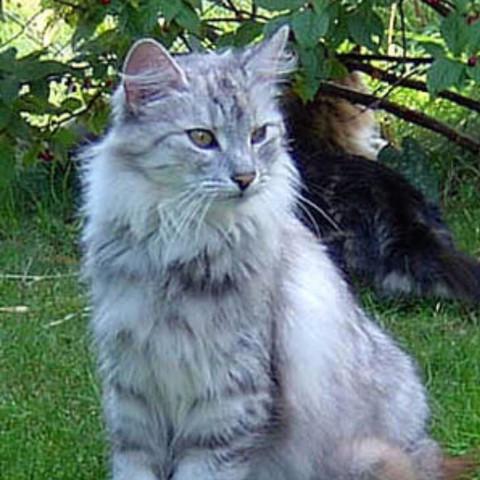 Himmelpfote  - (Aussehen, Warrior Cats)