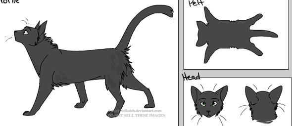 Kieselpfote - (Buch, Name, Warrior Cats)