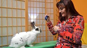 - (Haustiere, Kaninchen, Tricks)