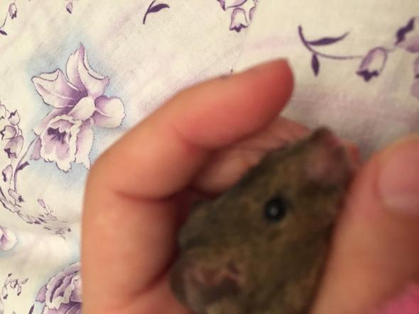 Meine maus❤️ - (Maus, anfreunden)