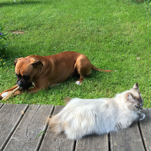 Emma und Maya  - (Hund, Katze, Chihuahua)