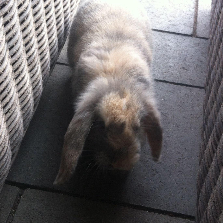 namen f r meine zuk nftigen kaninchen ein l wenkopf ein normales zwergkaninchen haustiere. Black Bedroom Furniture Sets. Home Design Ideas