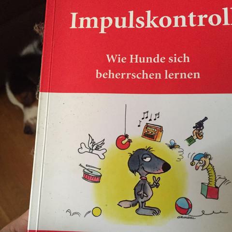 Impulskontrolle-Wie Hunde sich beherrschen lernen - (Hund, Welpen)
