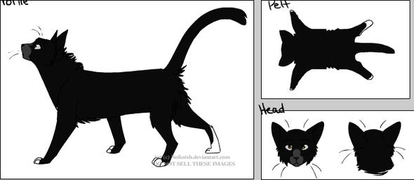 Ginsterpfote männlich - (Namen, Warrior Cats)