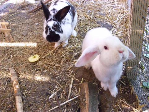 Kaninchen Liegt Nur Rum