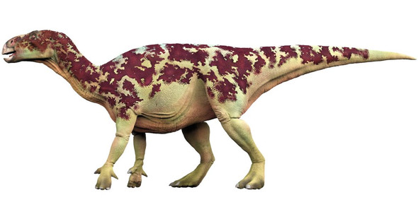 - (Gott, Bibel, Dinosaurier)