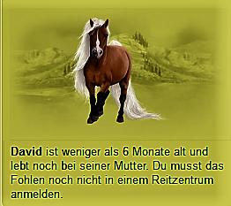 Das ist seine Angabe. (Reitzentrum...) - (Pferde, Howrse, Pferd kaufen)