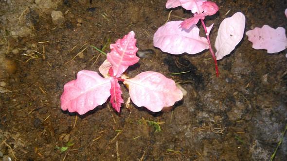 - (Pflanzen, Natur, Albino-Pflanzen)