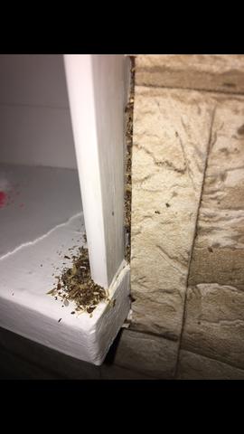 Was ist das :( - (Insekten, Schädlinge, Ameisen)