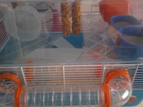 meine mäuschen - (fressen, Rennmaus)