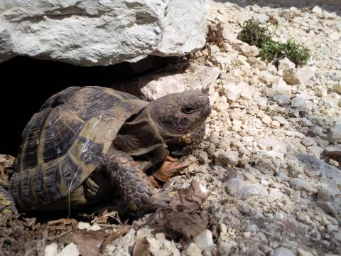 - (Haustiere, Landschildkröten, Freigehege)