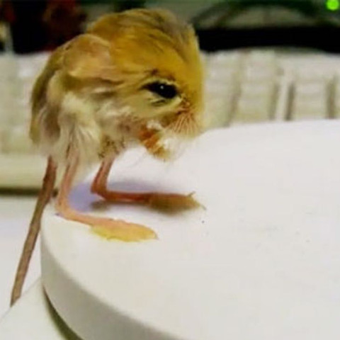Maus seltsam  - (Tiere, Maus)