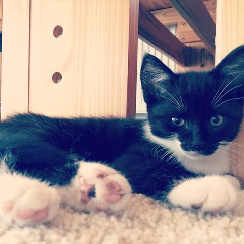 💜❤️💕💜❤️ - (Katze, Katzen, Namen)