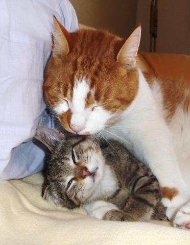 - (Katzen, Kater)