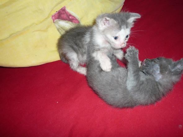 kaempfen geht auch mit floehen - (Katzen, Flöhe)