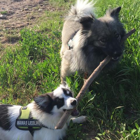 Teddy und Püppi  - (Hund, Name, Rasse)