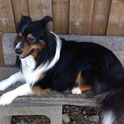 2. Draußen - (Hund, Name, Rasse)