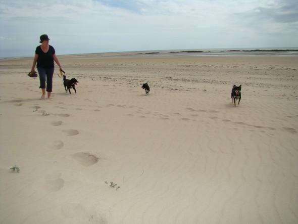 stand normandie - (Hund, Urlaub, Frankreich)
