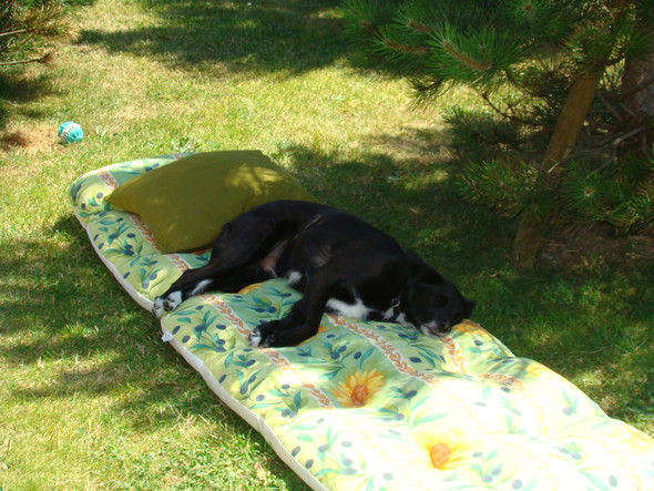 hund macht ferien - (Hund, Urlaub, Frankreich)