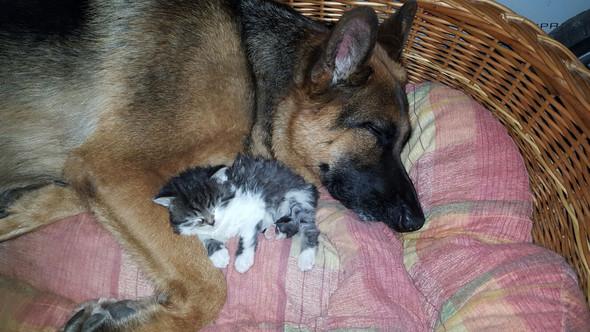 Sie schlafen jeden tag miteinander - (Tiere, Hund, Katze)