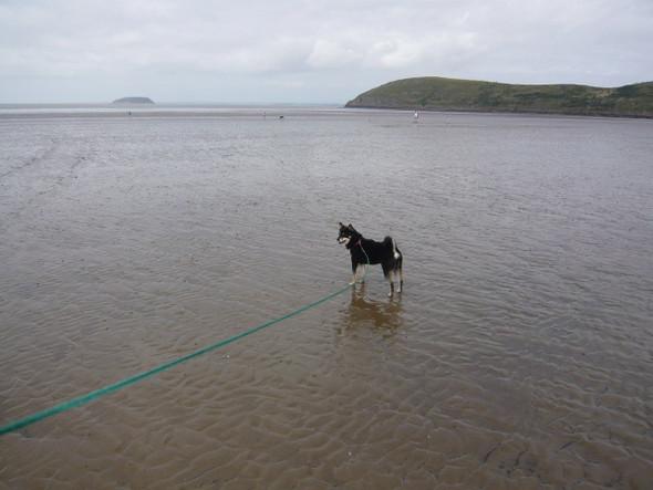 mit hund am meer - (Hund, schwimmen)