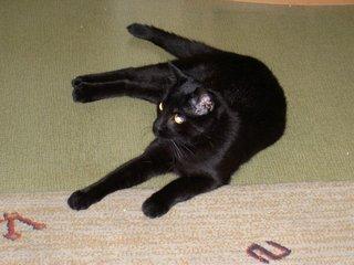 wieso haben katzen schwarze p nktchen auf der nase tiere haustiere. Black Bedroom Furniture Sets. Home Design Ideas