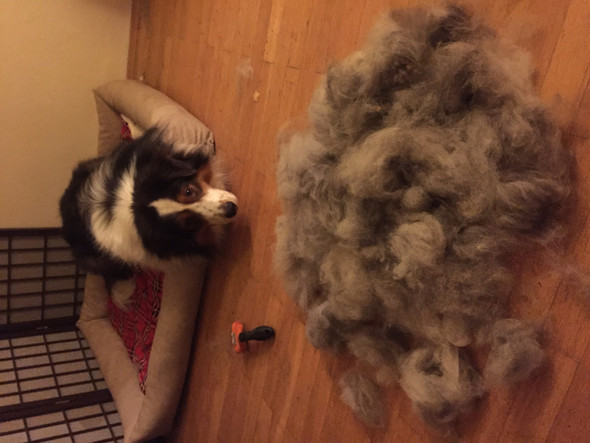 Unterwolle 1 - (Hund, Pflege, Fell)