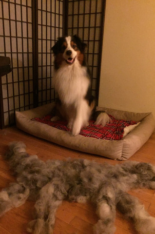 Unterwolle 2 - (Hund, Pflege, Fell)