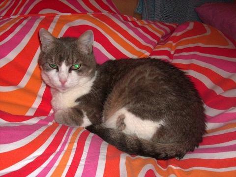 Pukky - (Katze, Tierheim, gewöhnen)