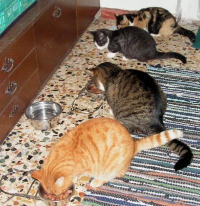 katzen aneinander gewoehnen wie lange kann das dauern katze tierheim gew hnen. Black Bedroom Furniture Sets. Home Design Ideas