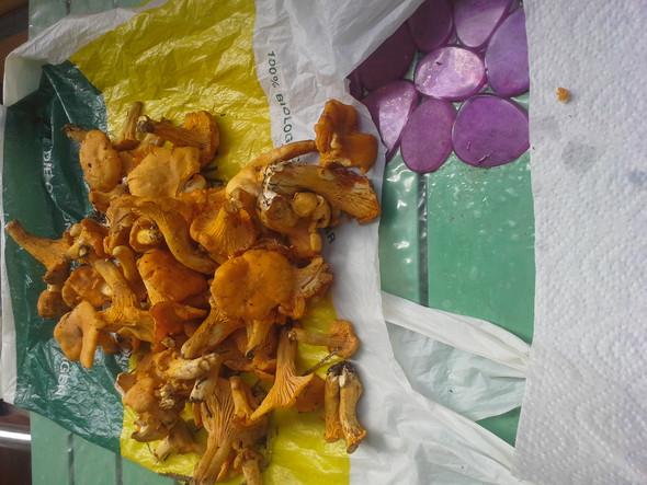 Pfifferinge, Eierschwammerl - (essen, Kochen, Pilze)