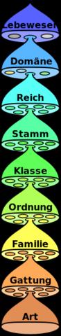 Taxonomie Hierarchie - (Tiere, Biologie, Pflanzen)